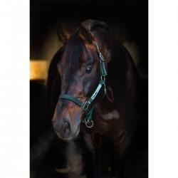 Horseware Halfter Field Safe Tannengrün