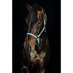 Horseware Halfter Field Safe Hellblau