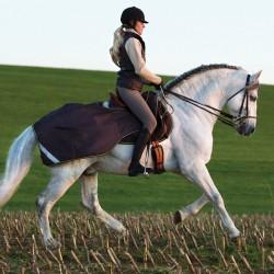 Horseware Amigo Competition Sheet Ausreitdecke